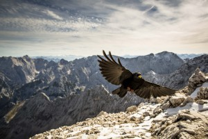 Alpspitz (31 von 47)